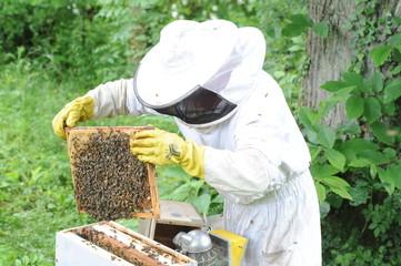 apiculteur