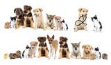 set pets - 65760014