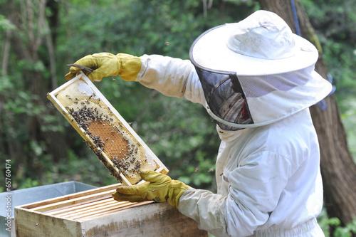 Foto op Plexiglas Bee apiculteur