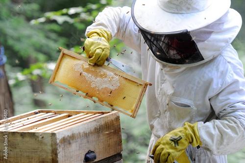 Fotobehang Bee apiculteur