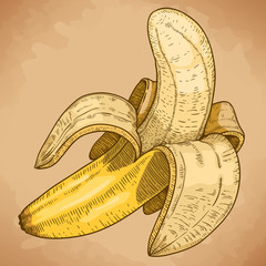 engraving illustration of yellow banana