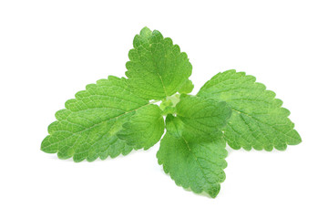 young green leaves of mint on a white background