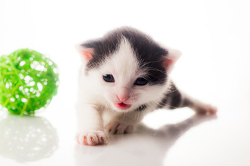 Little kitten on white background