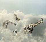 Giraffes Paradise