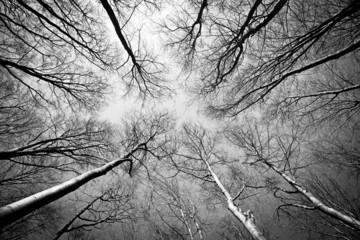 Laubwald im Herbst S/W
