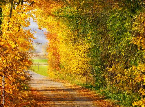 Leinwanddruck Bild Herbstwanderung