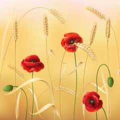 Wheat and poppy