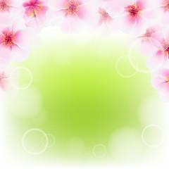 Pink Cherry Flower Border With Blur