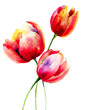 Quadro Red Tulips flowers