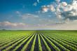 Leinwanddruck Bild - Soybean Field