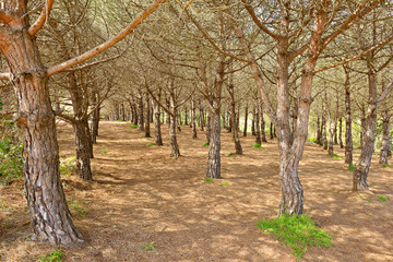 Typical dry Mediterranean forest in sunny spring day