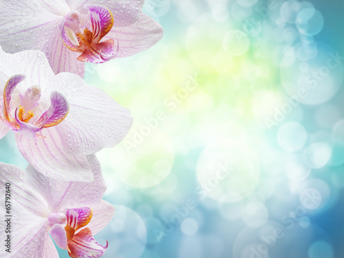 yellow flowers orchids isolated on white