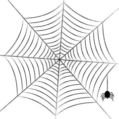 simple web with little spider