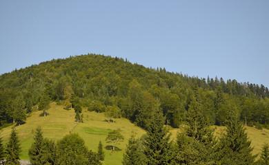 лесистая вершина горы