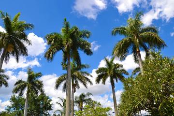 Tourisme - Palmiers à Miami - Floride