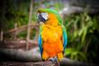 Parrot Relaxing