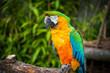 Closeup Parrot