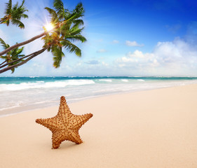 Starfish with ocean , beach and seascape.