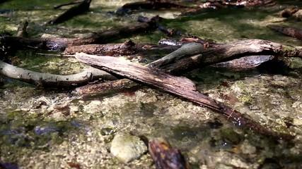 Flaches Flussbett
