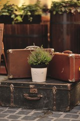 floral arrangement on the street and old suitcases flowerpot wit