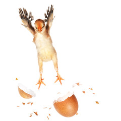 Chick Jumping Out Of Its Egg