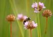 ape su un fiorellino