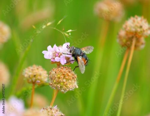 insetto su un fiorellino