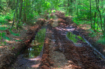 Muddy road with tire tracks in a forest