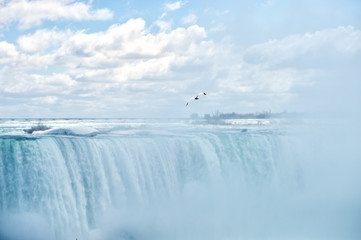 Niagara Falls - Sea gull soaring in heavy mist
