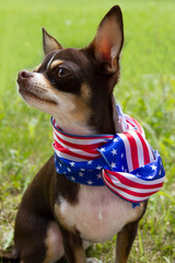 Funny Patriotic Dog.