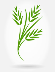wheat ears vector background