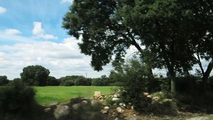dehesa, grassland