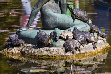 group of turtles in the sun