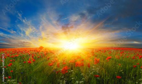 Цветы на полях