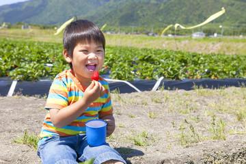 イチゴ狩りを楽しむ子供