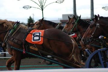帯広のばんえい競馬