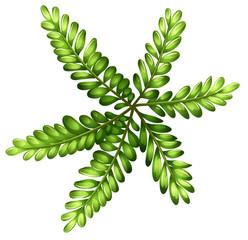 A topview of a fern