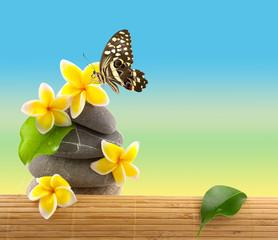 papillon sur fleurs de plumeria