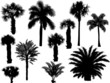 eleven palm silhouettes isolated on white