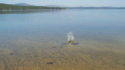 stone makes splash at lake water, slow motion.