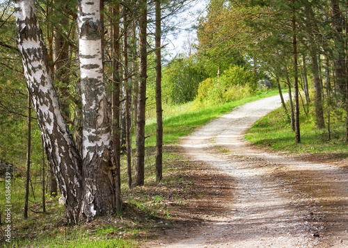 Road in the forest - 65845639