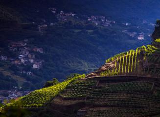 raggio di luce sui vigneti in Valtellina