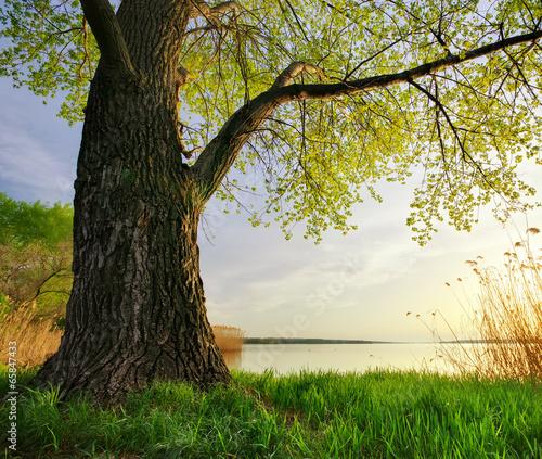 Foto op Plexiglas Landschappen Spring nature