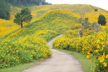 "Постер, картина, фотообои ""Middle Road flower field"""