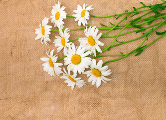 camomile flowers on light natural linen texture background
