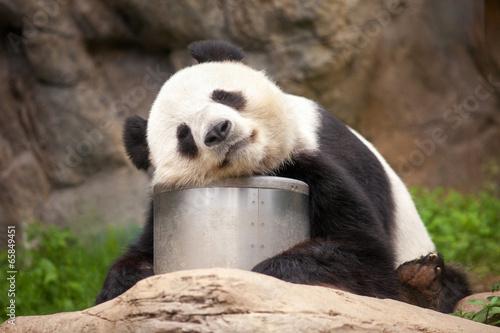 Foto Spatwand Dragen Schlafender Panda