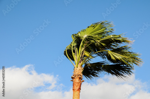 Foto op Canvas Singapore Palm Tree Blowing In The Wind
