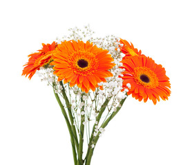 Bouquet of gerbera on white.