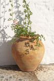 ancient spanish terracotta flowerpot