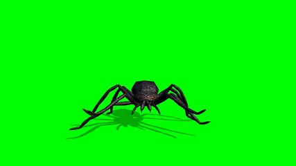 Spider walks - green screen